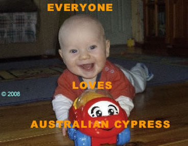 Picture - baby on Australian Cypress floor. ©2009.
