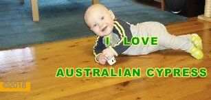 Picture: Families love Australian Cypress, especially the kids. ©.